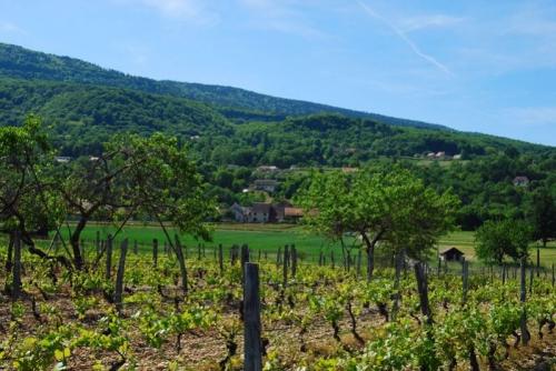 Plateau-Massignieu_799x535.JPG
